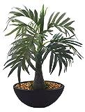 Fourwalls Roystonea Bonsai Plant (32 cm , Green)
