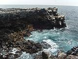 Image de Faszination Insel: Galapagos (Blu-ray)