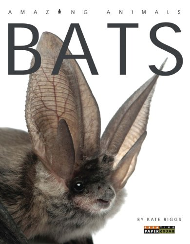 Amazing Animals: Bats