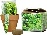 S.F. Imports GB-CILANTRO/MD Grow Your Own Medium Herb Kit, Cilantro