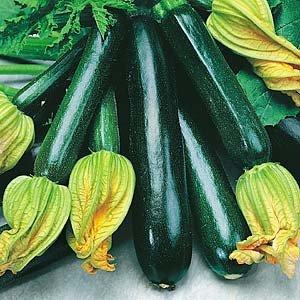 Summer Squash Black Beauty Zucchini Certified Organic Heirloom Seeds 25 Seeds