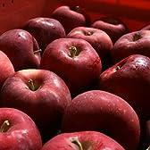 紅玉(こうぎょく) Aランク(贈答用)3kg 箱入り(約2kg程度 12玉前後) ≪ご贈答用≫ 長野県産りんご