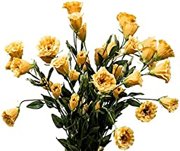 Double Lisianthus , Yellow, 34 Inches High, 12 Floral Spray