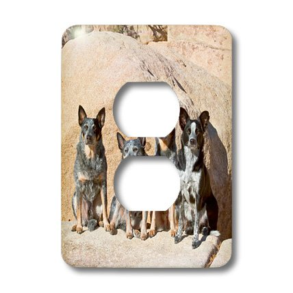 Lsp_88793_6 Danita Delimont - Dogs - Four Australian Cattle Dogs - Us05 Zmu0109 - Zandria Muench Beraldo - Light Switch Covers - 2 Plug Outlet Cover