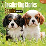 BT Cavalier King Charles Spaniel Puppies 2015 Wall