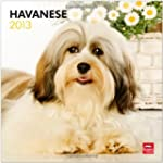 Havanese 2013 Square 12x12 Wall
