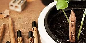 EZ Life Ez Life Diy Grow Your Pencil Plant