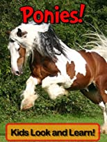 Ponies! Learn About Ponies and Enjoy Colorful Pictures - Look and Learn! (50+ Photos of Ponies)