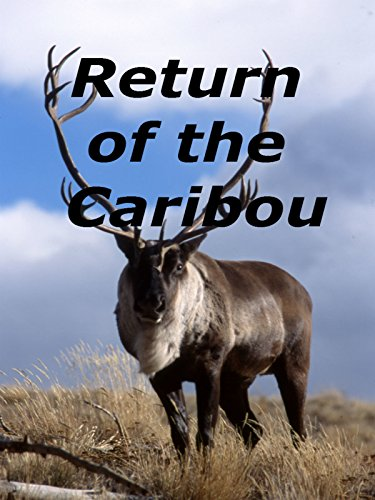 Return of the Caribou on Amazon Prime Video UK