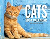 Cats 2014 Mini Day-to-Day Calendar