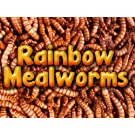 5000 Live Mealworms, Reptile, Birds, Chickens, Fish Food