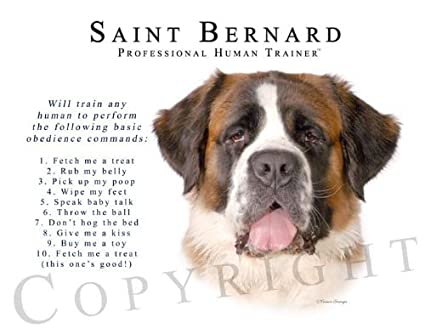 The gallery for --> St Bernard Full Grown