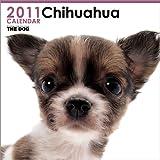 THE DOG チワワ  2011年カレンダー