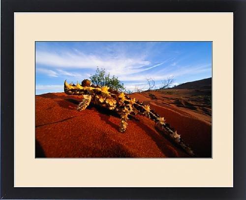 vinyl wall decals australia highest quality photos