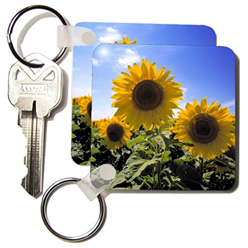 3Drose 8 X 8 X 0.25 North Dakota, Sunflowers In Cass County, Us35 Rer0013, Ric Ergenbright Key Chains, Set Of 4 (Kc_93338_2)