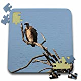 Angelique Cajams Safari Birds - South African Vulture in a tree - 10x10 Inch Puzzle (pzl_26837_2)