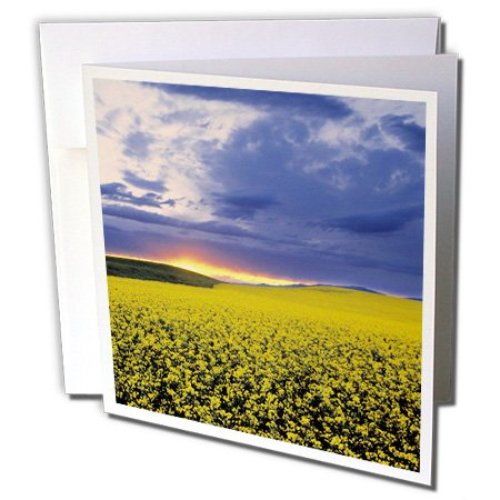 Danita Delimont - Agriculture - Idaho, Swan Valley, Field of canola, agriculture - US13 RER0000 - Ric Ergenbright - 12 Greeting Cards with envelopes (gc_90126_2)