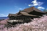 めざせパズルの達人 1000ピース 日本風景桜 桜咲く清水寺-京都 10-722