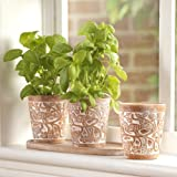 Bird & Bramble Herb Pots (3)