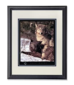 Gray and Black Wolf in Snow Soul Mates Photo Wall Picture AntW/B Matted Framed Art Print