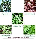 VGreen Garden Store VGreen Terrace Gardening Organic Leafy Vegetable Seeds Combo Pack
