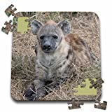 Angelique Cajam Safari Animals - South African Hyena front view - 10x10 Inch Puzzle (pzl_20114_2)