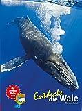 Entdecke die Wale