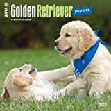 Golden Retriever Puppies 2014 Calendar 18-Month