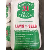 Kentucky 31 Tall Fescue 50lbs