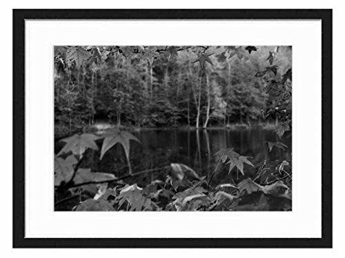 autumn leaves in focus - Art Print Wall Solid Wood Framed Picture (Black & White 20x14 inches)