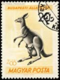 POSTAGE STAMP HUNGARY 20 FORINT KANGAROO JOEY ZOO BUDAPEST NEW FINE ART PRINT POSTER PICTURE 30x40 CMS CC3853