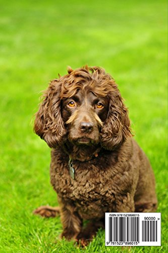 The Boykin Spaniel Dog Journal: 150 page lined notebook/diary