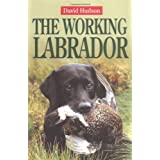 The Working Labradorby David Hudson