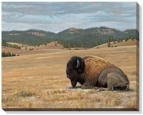 home-again-bison-by-george-lockwood-gallery-wrapped-canvas-print-open-edition-by-wild-wings