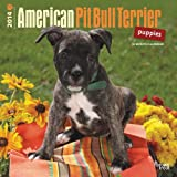 img - for American Pit Bull Terrier Puppies 18-Month 2014 Calendar (Multilingual Edition) book / textbook / text book