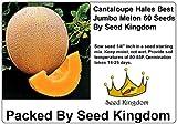 Cantaloupe Hales Best Jumbo Melon Great Heirloom Vegetable 60 Seeds By Seed Kingdom