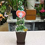 クリスマスツリー グリーンネックレスのクリスマス風 ツリー 4号鉢植え