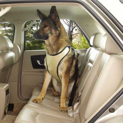 Pet Gear Car Seat front-390898