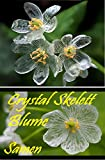 25x Crystal Skelett Blume Samen Samen Sehr selten in DE Pflanze Rarität #39