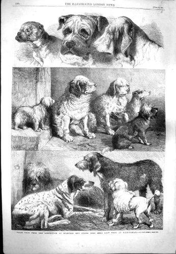 1861 PRIZE SPORTING DOGS EXHIBITION BIRMINGHAM MASTIFF