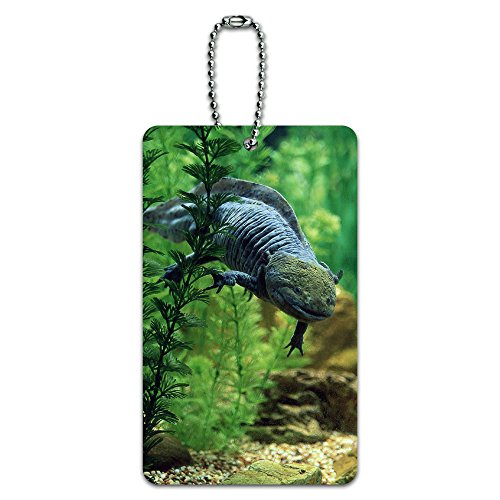 Axolotl-mexikanischen salamandar-Wasser Monster ID-Tag Gepäck-Koffer Handgepäck