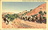 Rounding Up Hereford Cattle On A West Texas Range Cowboy Western Original Vintage Postcard