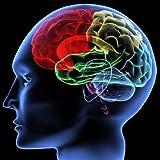 Brain – 42″H x 42″W – Peel and Stick Wall Decal by Wallmonkeys
