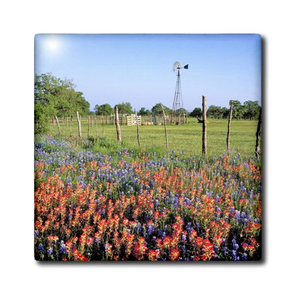 Ct_94538_7 Danita Delimont - Texas - Texas, Llano. Indian Paintbrush, Bluebonnets - Us44 Rer0000 - Ric Ergenbright - Tiles - 8 Inch Glass Tile