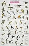 Mac's Field Guide Northern California Park & Garden Birds (0898863147) by Craig MacGowan