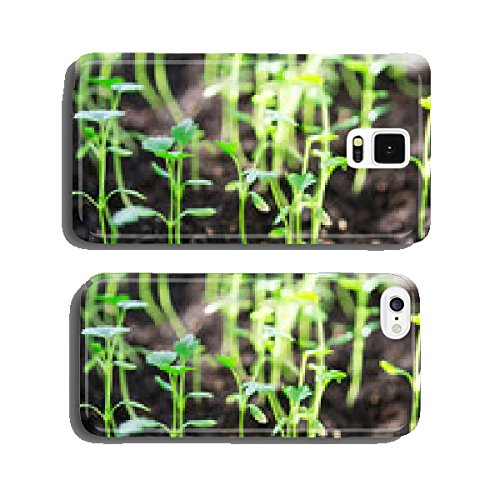 celery-seedings-sagebrush-or-apium-graveolens-l-cell-phone-cover-case-iphone5