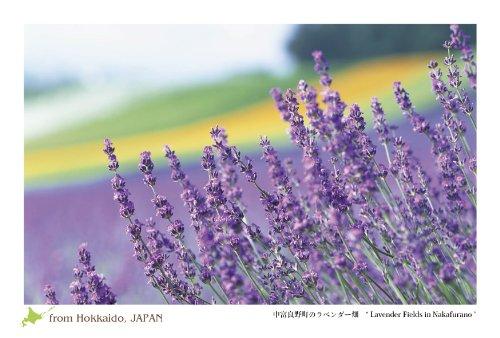 "PC-204 北海道 風景 名所 はがき ポストカード 中富良野町 ラベンダー畑 1枚入 【 Postcards from Hokkaido, JAPAN -a piece- "" Lavender Fields in Nakafurano "" 】"