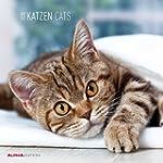 Katzen 2015 - Cats - Brosch�renkalend...