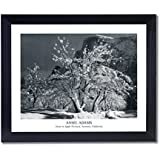 Solid Wood Black Framed Ansel Adams Snow Apple Tree B/W Photo Landscape Pictures Art Print