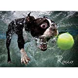 Underwater Dogs: Rocco 1000 Piece Jigsaw...